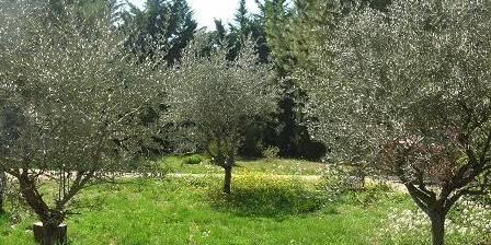 Mas de la Cigale Bleue Olive trees