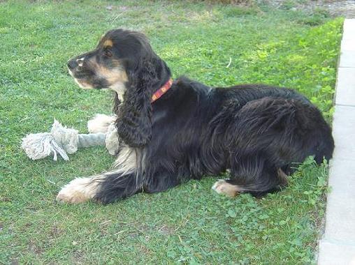 Chambre d'hote Bouches du Rhône - nous acceptons les chiens