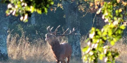 L'Orée du bois en Sologne Chambord au petit matin
