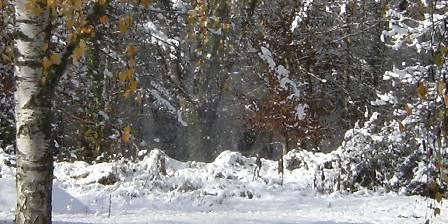 L'Orée du bois en Sologne Le charme en hivers...