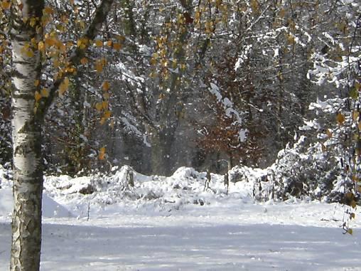 Le charme en hivers...