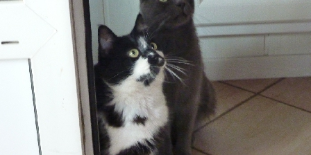 Le Petit Chantuzet Our cats